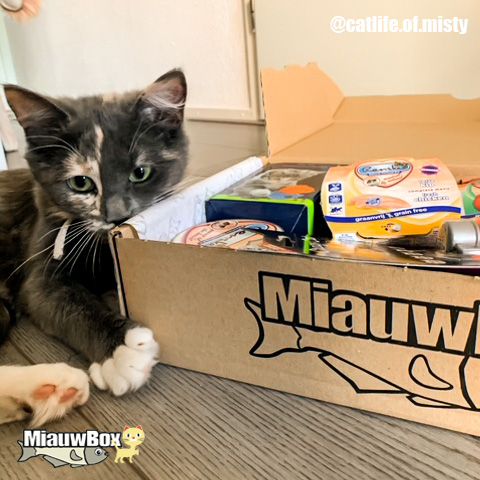 Kitten miauwbox
